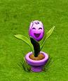 śpiewający tulipan.png