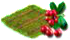 żurawina.png
