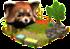 czerwona panda.png