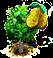 drzewo chlebowca.png