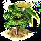 drzewo eukaliptusowe.png