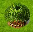 drzewo florenów.png