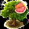 drzewo grejpfrutowe.png