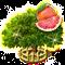 Drzewo grejpfrutowe XXL.png