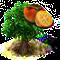 drzewo kaki.png