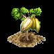 Drzewo kapokowe.png