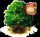 drzewo makadamii.png