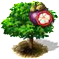 drzewo mangostanu.png