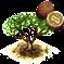 Drzewo mongongo.png