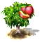 drzewo nektarynkowe.png