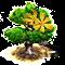 Drzewo ylang-ylang.png