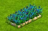 duża niebieska grządka.png