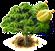 durian właściwy.png