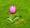 dzieci -kwiaty.png