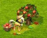grad jabłek.png