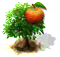 jabłoń.png