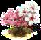 japońskie drzewo wiśniowe.png