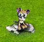 kot podwórkowy 2010.png