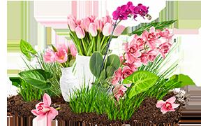 kwiaty.png