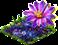 Kwiaty-pułapki.png