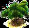 ostrokrzew paragwajski.png
