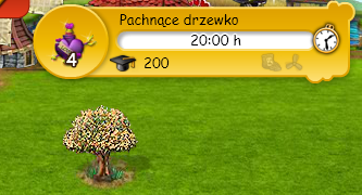 pach.png