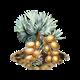 Palma bismarckia.png