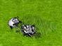 parka owiec.png