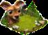 pastwisko dla jeleni.png