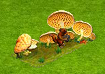 problem z grzybami.png