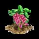 Różowy bananowiec.png