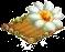 saguarocactus.png