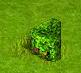 Wiecznie zielony ligustr do lewego rogu.png