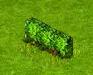 Wiecznie zielony ligustr.png